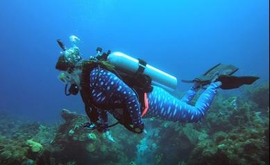 whale shark suit 5